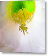 Cactus Bloom Number Six Metal Print