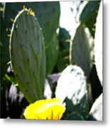 Cactus Bloom Metal Print