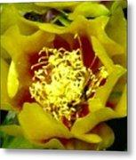 Cactus Blossom Open Metal Print