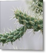 Cactus Branch With Wet White Long Needles Metal Print