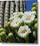 Cactus Budding Metal Print