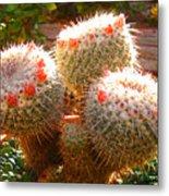 Cactus Buds Metal Print
