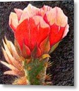 Cactus Cutie Metal Print
