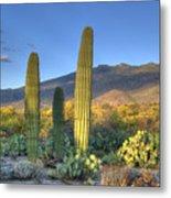 Cactus Desert Landscape Metal Print