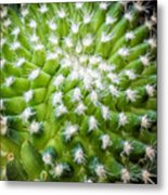 Cactus Feathers Metal Print