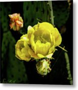 Cactus Flower 07-010 Metal Print