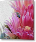 Cactus Flower And A Busy Bee Metal Print