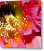 Cactus Flower Close Up Metal Print