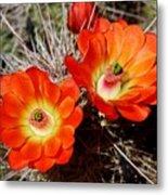 Cactus Flower Twins Metal Print