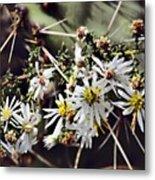 Cactus Flowers Metal Print