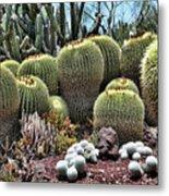 Cactus Galore  Metal Print