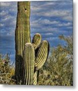 Cactus Home Metal Print