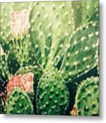Cactus In Blossom  Metal Print