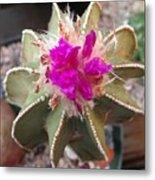 Cactus In Flower Metal Print