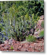 Cactus In The Wild Metal Print
