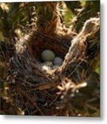 Cactus Nest Metal Print