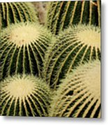 Cactus Party Metal Print