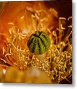 Cactus Pistil Metal Print