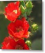 Cactus Red Beauty Metal Print