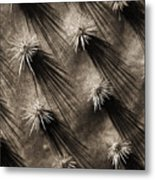 Cactus Shadows Metal Print