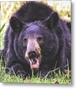 Cades Cove Black Bear Metal Print
