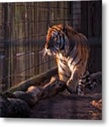 Caged King Of The Jungle Metal Print