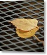 Caged Leaf Metal Print