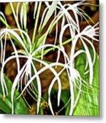 Cahaba Lily In Huntington Botanical Gardens In San Marino-california Metal Print