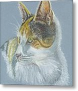 Calico Callie Metal Print