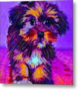 Calico Dog Metal Print by Jane Schnetlage