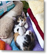 Calico Kitten On Towels Metal Print