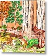 Calif. Redwoods Metal Print