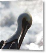 California Brown Pelican 1 Metal Print