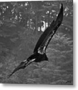 California Condor In Flight II Bw Metal Print