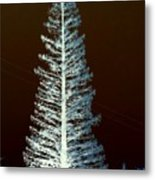 California High Sierra Pine Tree Metal Print