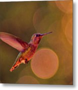 California Hummingbird Metal Print