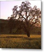 California Hwy 25 Oak Metal Print