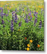 California Meadow Metal Print