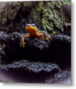California Newt 2 Metal Print