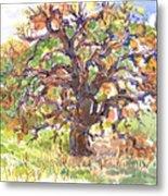 California Oak In Winter Metal Print