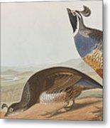 California Partridge Metal Print