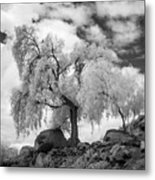 California Pepper Tree Metal Print
