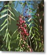 California Pepper Tree Leaves Berries Abstract Metal Print