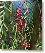 California Pepper Tree Leaves Berries I Metal Print