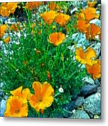 California Poppie In River Rock Metal Print