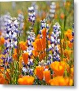 California Poppies And Lupine Wildflowers Metal Print