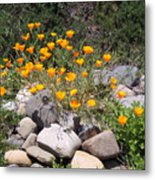 California Poppies Photograph Metal Print