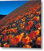 California Poppies Quartz Hill Metal Print