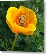 California Poppy And Honey Bee Metal Print