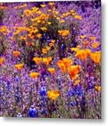 California Poppy And Lupin Metal Print